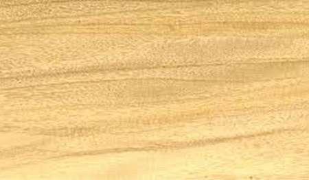 venta de madera Palo blanco en Salta, Argentina
